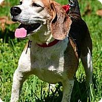 Adopt A Pet :: Ronnie - Miami, FL
