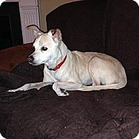 Adopt A Pet :: Trinket - Marietta, GA