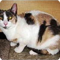 Adopt A Pet :: Turtle - Irvine, CA