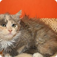 Adopt A Pet :: KENDALL - SILVER SPRING, MD