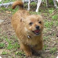 Adopt A Pet :: Sweet Pea - Villa Rica, GA