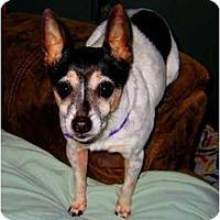 Adopt A Pet :: tia - Jacksonville, FL