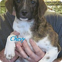 Adopt A Pet :: Chevy - Linden, TN
