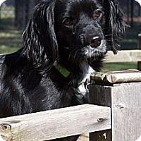 Adopt A Pet :: Milo - Sugarland, TX