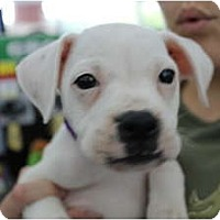 Adopt A Pet :: Stella - ARDEN, NC