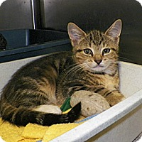 Adopt A Pet :: Aldo - Dover, OH
