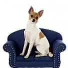 Adopt A Pet :: Rachael