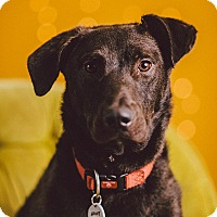 Adopt A Pet :: Howie - Portland, OR