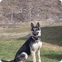 Adopt A Pet :: MIA - Tully, NY