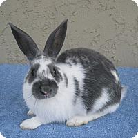 Adopt A Pet :: Jalepeno - Bonita, CA