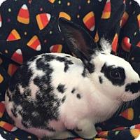 Adopt A Pet :: Archie - Columbus, OH