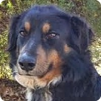 Adopt A Pet :: Doozy - Baltimore, MD