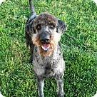 Adopt A Pet :: Jackson of Georgia