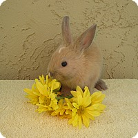 Adopt A Pet :: Spagetti - Bonita, CA
