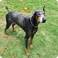 Adopt A Pet :: Gretchen - Fort Worth, TX