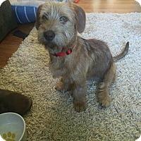 Adopt A Pet :: Nak - Westminster, MD