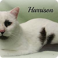 Adopt A Pet :: Harrison - Melbourne, KY