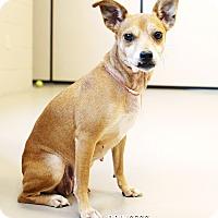 Adopt A Pet :: Princess *REBOUND* - Appleton, WI