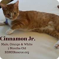 Adopt A Pet :: Cinnamon Jr. - Temecula, CA