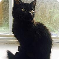 Adopt A Pet :: Chrissy - Navarre, FL