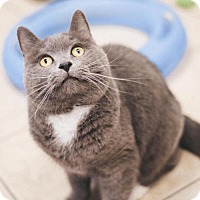Adopt A Pet :: Samantha - Parma, OH