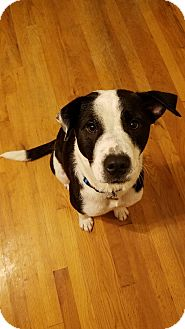 Border Collie Mix Dog for adoption in Laingsburg, Michigan - Daisy