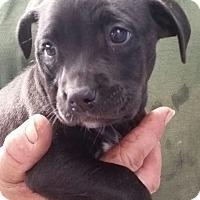 Adopt A Pet :: December - Gainesville, FL