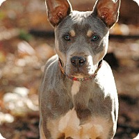 Adopt A Pet :: Pal - Lawrenceville, GA