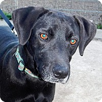 Adopt A Pet :: Boomer - NEW VIDEO - Westport, CT