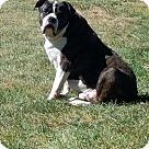 Adopt A Pet :: Buzz (COURTESY POST)