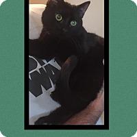 Adopt A Pet :: Viktor - Scottsdale, AZ
