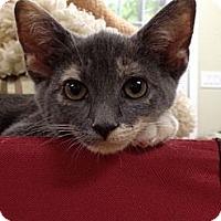 Adopt A Pet :: Kenzie - Monroe, GA