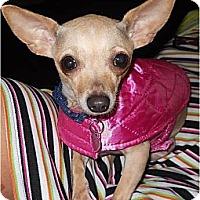 Adopt A Pet :: Venus - Hilliard, OH