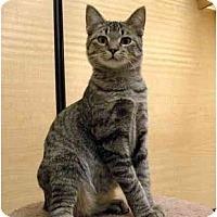 Adopt A Pet :: Crayola - Irvine, CA