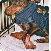 Adopt A Pet :: Samson - Nashville, TN