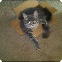 Adopt A Pet :: Little Bit - Simpsonville, SC