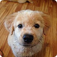 Adopt A Pet :: Duffie - Marietta, GA