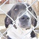 Adopt A Pet :: Otto(BRN)
