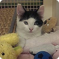 Adopt A Pet :: Oakland - Stafford, VA