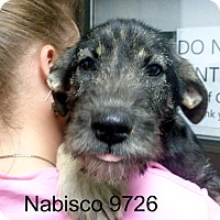 Adopt A Pet :: Nabisco - baltimore, MD
