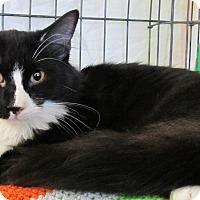 Adopt A Pet :: Gizmo - Seminole, FL