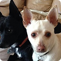 Adopt A Pet :: Helo & Helix - Austin, TX