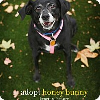 Adopt A Pet :: Honey Bunny - Mission, KS