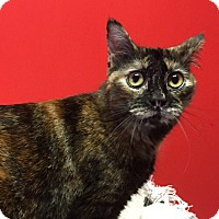 Adopt A Pet :: Abra - Topeka, KS
