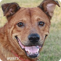 Adopt A Pet :: Honey - Lone Oak, TX