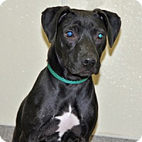 Adopt A Pet :: Guster - Port Washington, NY
