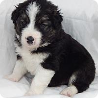 Adopt A Pet :: Trevor (5 lb) - SUSSEX, NJ