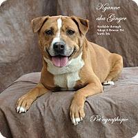 Adopt A Pet :: Kyanne aka Ginger - Las Vegas, NV