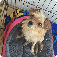 Adopt A Pet :: Juliette - San Francisco, CA
