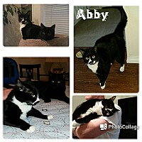 Adopt A Pet :: Abby - Arlington/Ft Worth, TX